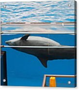 Dolphin Show - National Aquarium In Baltimore Md - 1212198 Acrylic Print