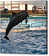 Dolphin Show - National Aquarium In Baltimore Md - 1212212 Acrylic Print by DC Photographer