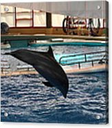 Dolphin Show - National Aquarium In Baltimore Md - 1212215 Acrylic Print
