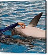 Dolphin Show - National Aquarium In Baltimore Md - 1212231 Acrylic Print by DC Photographer