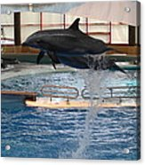 Dolphin Show - National Aquarium In Baltimore Md - 1212249 Acrylic Print