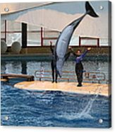 Dolphin Show - National Aquarium In Baltimore Md - 1212273 Acrylic Print by DC Photographer