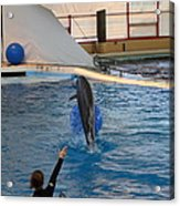 Dolphin Show - National Aquarium In Baltimore Md - 121239 Acrylic Print by DC Photographer