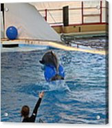 Dolphin Show - National Aquarium In Baltimore Md - 121240 Acrylic Print by DC Photographer