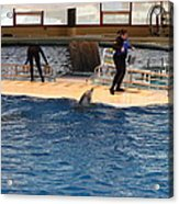 Dolphin Show - National Aquarium In Baltimore Md - 121246 Acrylic Print by DC Photographer