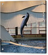 Dolphin Show - National Aquarium In Baltimore Md - 121255 Acrylic Print