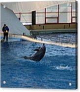 Dolphin Show - National Aquarium In Baltimore Md - 121258 Acrylic Print by DC Photographer