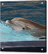 Dolphin Show - National Aquarium In Baltimore Md - 121261 Acrylic Print by DC Photographer