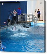 Dolphin Show - National Aquarium In Baltimore Md - 121292 Acrylic Print