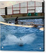 Dolphin Show - National Aquarium In Baltimore Md - 121297 Acrylic Print by DC Photographer