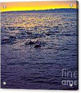 Dolphins At Sunset Acrylic Print