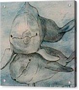 Dolphins Duo Underwater Art Cathy Peek Acrylic Print