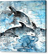 Dolphins In Gran Canaria Acrylic Print