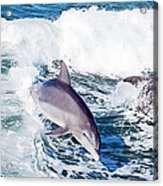 Dolphins Jumping Acrylic Print