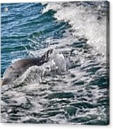 Dolphins Smile Acrylic Print