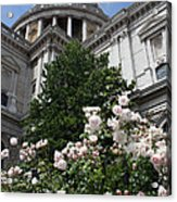 Dome Of St Paul's Acrylic Print by Stephen Norris