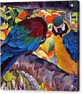 Dominican Birds Acrylic Print