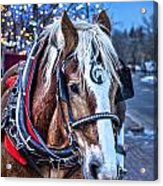 Donald Acrylic Print by Baywest Imaging