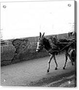 Donkey Cart In Marrakech Acrylic Print