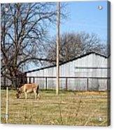 Donkey Lebanon In Oklahoma Acrylic Print