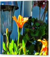Donna Is Always Beaming Acrylic Print