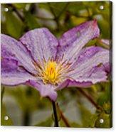 Donna's Purple Flower Acrylic Print
