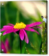 Donna's Teeter Totter Acrylic Print