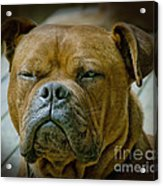 Don't Be Deceived Acrylic Print by Karen Lewis