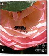 Don't Bug Me Acrylic Print
