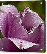 Dont Call Me A Monster Just Because I Have Teeth Purple Tulip Acrylic Print