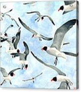 Don't Feed The Seagulls Acrylic Print