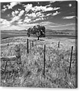 Don't Fence Me In - Black And White Acrylic Print