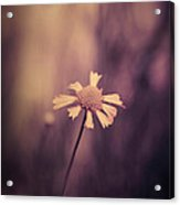Don't Forget Me Acrylic Print