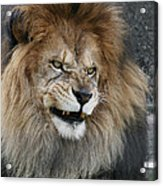 Don't Mess With Me Acrylic Print