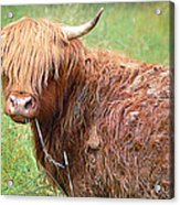 Don't Mess With Texas Acrylic Print
