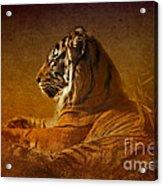 Don't Wake A Sleeping Tiger Acrylic Print