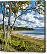 Door County Europe Bay Birch Acrylic Print