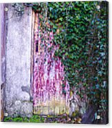 Door Covered In Ivy Acrylic Print