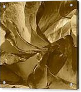Double Delight Rose 2 Acrylic Print