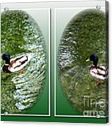 Double Duck Acrylic Print