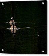 Double Goose Acrylic Print