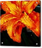 Double Petaled Lilly Acrylic Print