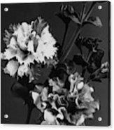 Double Petunias Acrylic Print