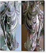 Double Portrait Of Old Carousel Horse Acrylic Print