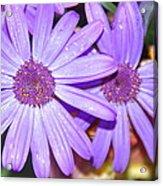 Double Purple Acrylic Print