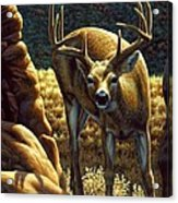 Whitetail Buck - Double Take Acrylic Print by Crista Forest