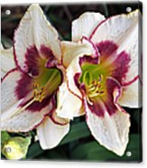 Double The Bloom Acrylic Print