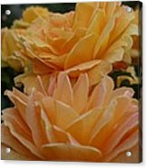 Double Trouble In Bloom Acrylic Print