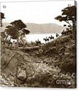 Douglas School For Girls At Lone Cypress Tree Pebble Beach 1932 Acrylic Print
