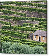 Douro Valley Vineyards Acrylic Print